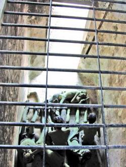 Tra Tấn, Kiểu Mỹ- Chuồng Cọp tại Việt Nam